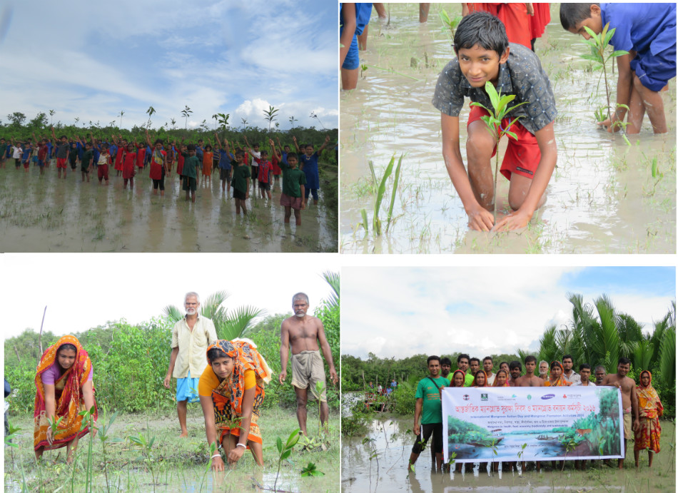 Mangrove action Day-16.jpg